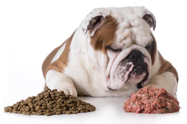 Foto Domande più comuni sulla nutrizione del Cane