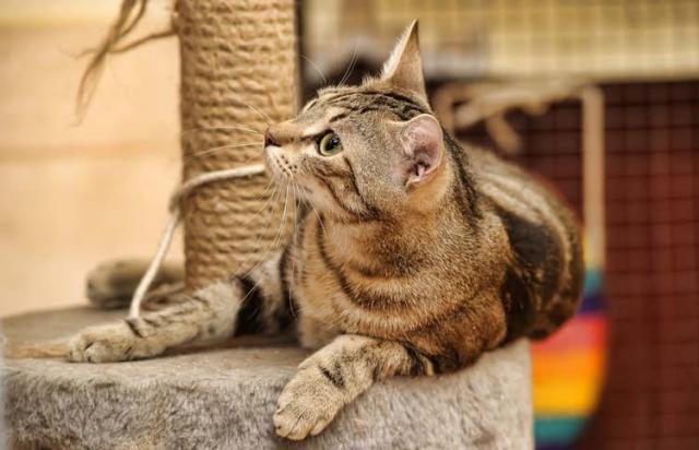 Foto Ambiente ideale per un Gatto