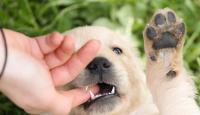 cane morde le mani