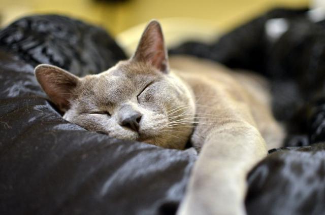 Foto 10 disturbi del Gatto anziano