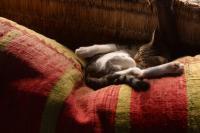 Foto Il gatto è debole e stanco? Cause e trattamento