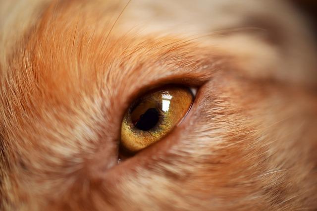 ittero cane