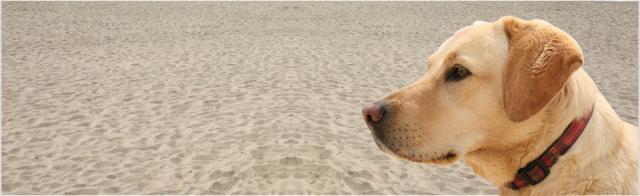 esaminare il cane della ghiandola prostatica