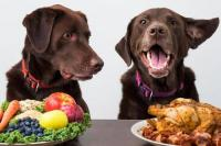 Foto 5 Ricette facili per il Cane