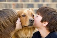 Foto 9 malattie trasmesse dai Cani