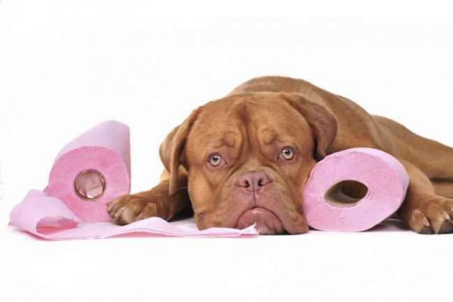 cane e carta igienica