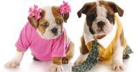 scegliere cane maschio femmina