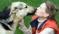 Foto Incredibile, il cane può fiutare il cancro nell'uomo