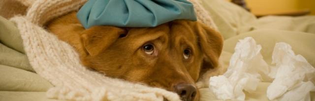 cane malato vomita