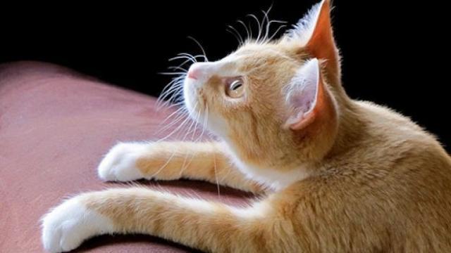 gatto cibo fatto in casa