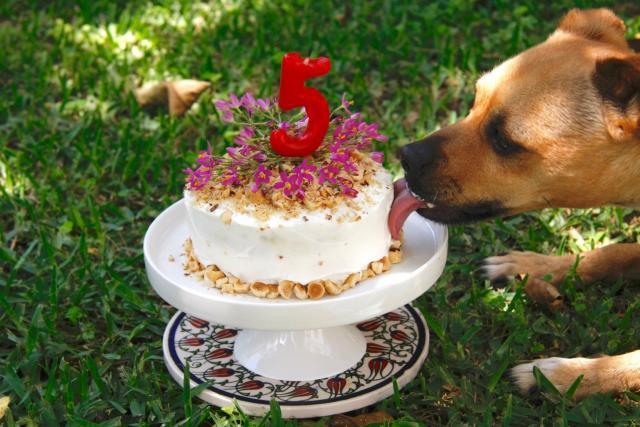 Foto Torte per Cani | Una torta per il compleanno del tuo cane