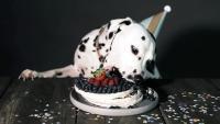torta in casa per cani