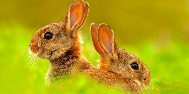 pericoli per il coniglio