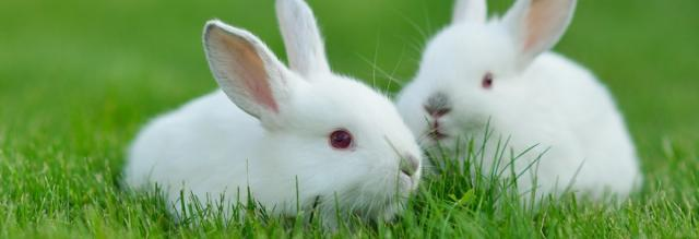 malattie coniglio