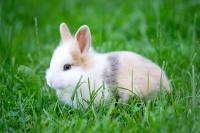 Foto 10 pericoli comuni per il coniglio