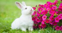 conigli e altri animali domestici