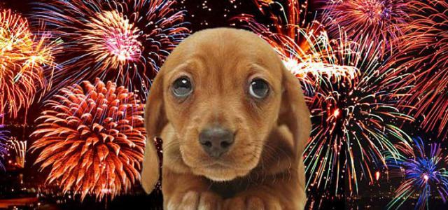 cane ha paura dei fuchi di artificio