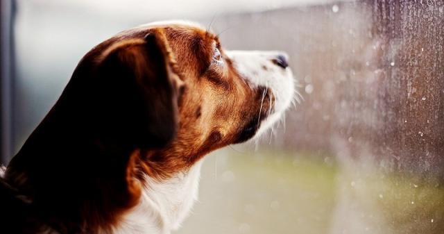cane pauroso temporale