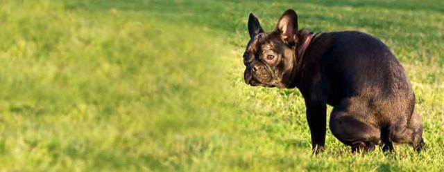 costipazione cane