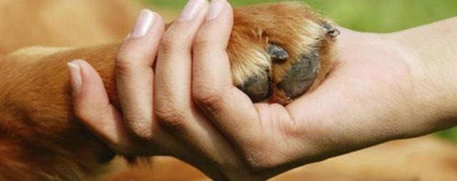 problemi di stitichezza cane