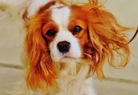 Foto Cause e trattamento della Costipazione nel cane