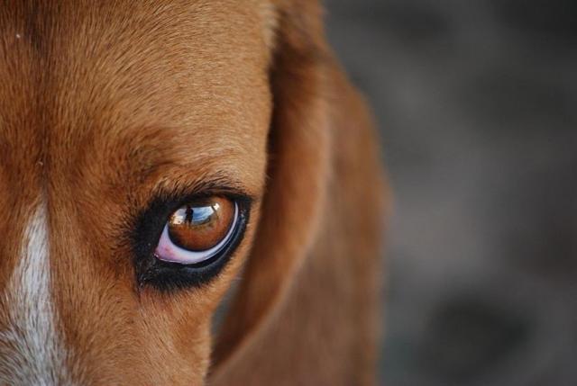 Foto 10 malattie comuni nei Cani