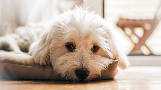 problemi comuni cane