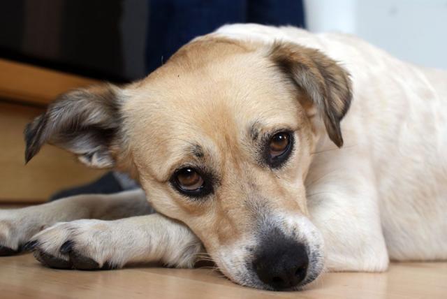Foto Malattie più comuni nel Cane