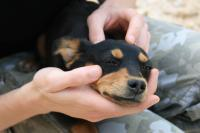 veleno per cani