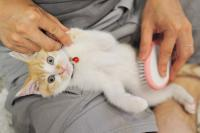 spazzola pulci gatto