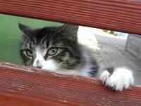 Foto Problemi renali nel Gatto