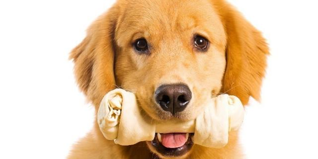 osso dentale cane