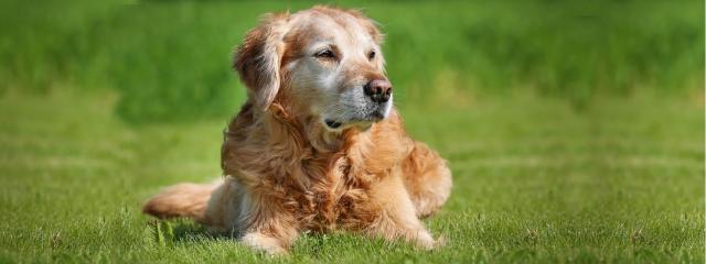 artrosi cane