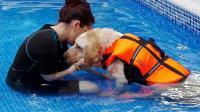 idroterapia cane osteoartrite