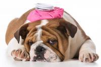 Foto Antinfiammatori per Cani