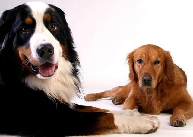 Foto Insufficienza renale nel Cane: sintomi e cure