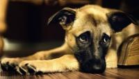 problemi renali cane