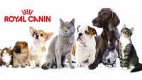 cibo cani royal canin
