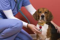 malattia valvola mitrale cane