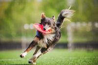 rottura legamento crociato cane