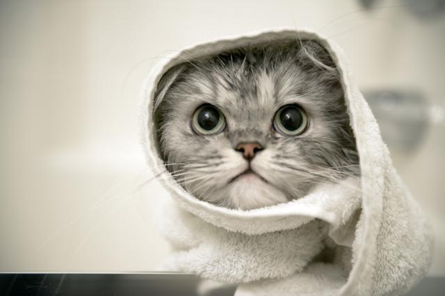 cheratocongiuntivite gatto