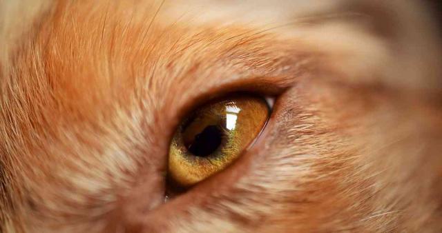 cause infezioni occhio cane