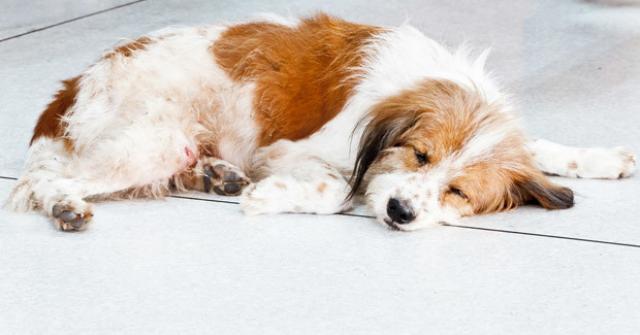 farmaci cane antiepilettici