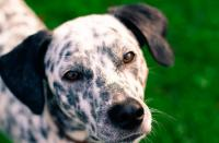 Foto Antidolorifico per cani: quale posso dare?