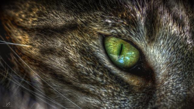 occhi infiammati gatto
