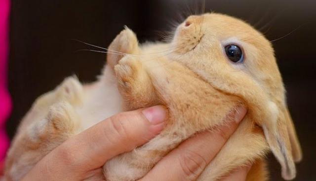 Foto Cosa mangiano i conigli?