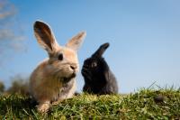 Foto Problemi respiratori nel Coniglio
