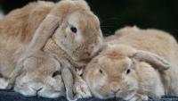 blocco intestinale coniglio