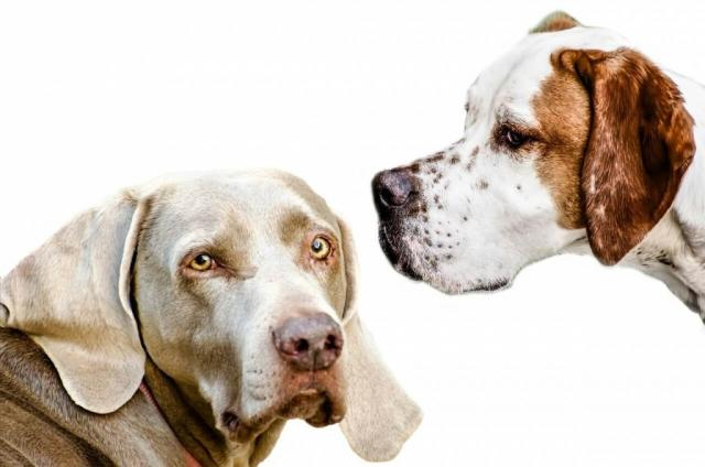 alternative sterilizzazione cane