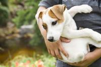 Foto Tenia nei cani: cause, sintomi e trattamento